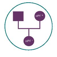 HPV-ne -prenosi-naslijede