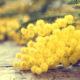 rak vrata maternice - dan mimoza